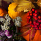 Fall pumpkins, yellow and red leaves - PhotoDune Item for Sale