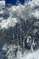 Snow-covered forest on a sunny day - PhotoDune Item for Sale