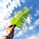 Fern leaf on the blue sky background - PhotoDune Item for Sale