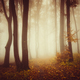 Mysterious red autumn forest with fog - PhotoDune Item for Sale