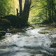River in green forest - PhotoDune Item for Sale