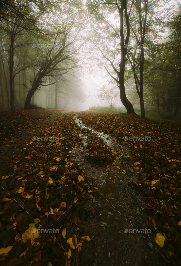 Enchanted forest road in autumn - Stock Photo - Images