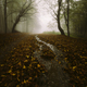Enchanted forest road in autumn - PhotoDune Item for Sale