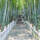 green bamboo forest and stone steps - PhotoDune Item for Sale