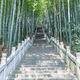 stone steps leads through green bamboo forest - PhotoDune Item for Sale