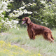 Beautiful happy dog standing in the grass - PhotoDune Item for Sale