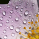 Purple flower with water drops - background idea - PhotoDune Item for Sale