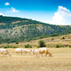 Cows in the mountain - PhotoDune Item for Sale