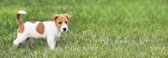 Web banner of a happy dog puppy - Stock Photo - Images