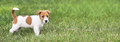 Web banner of a happy dog puppy - PhotoDune Item for Sale