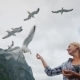 A Woman Is Feeding Gulls, a Cruise on the Fjords in Norway. Popular Entertainment for Tourists - VideoHive Item for Sale