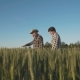 Father and Son Walks on the Wheat Field, Decides and Checks Harvest - VideoHive Item for Sale