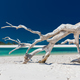 White driftwood tree on amazing Whitehaven Beach with white sand - PhotoDune Item for Sale