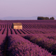 purple lavender flowers field with lonely old stone house - PhotoDune Item for Sale