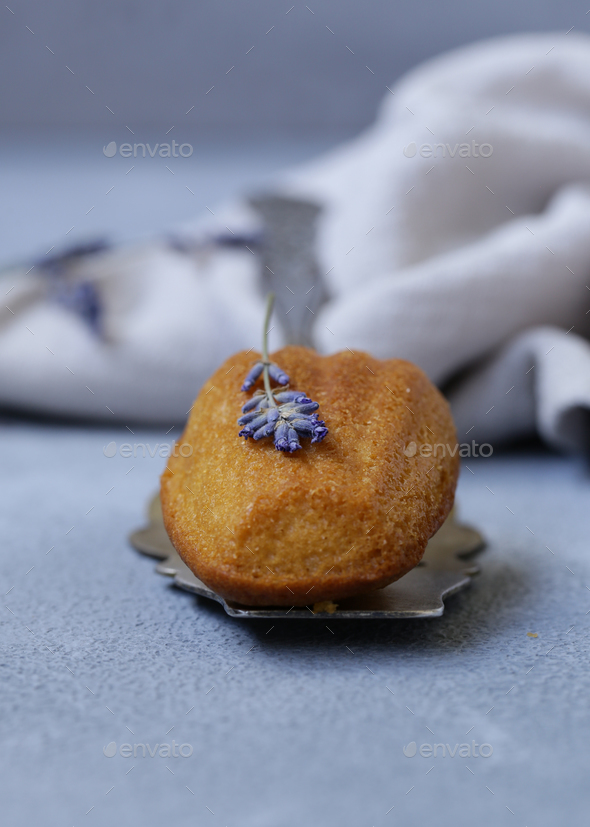 French Cookies Madeleine - Stock Photo - Images
