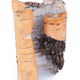 Birch bark on white background - PhotoDune Item for Sale