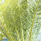 Sunshine effect Palm Trees Jungle Blue Sky Toned . Tropical Background Holiday Travel Design View - PhotoDune Item for Sale