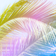 Palm leaf texture as natural background, the pantone color 2018 - PhotoDune Item for Sale