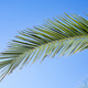 Fresh green palm leave with its beautiful texture - PhotoDune Item for Sale