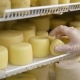 Worker Is Putting Formed Cheese in a Refrigerator Into Storage in Cheese Factory, Wearing Hygienic - VideoHive Item for Sale