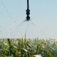 Automated Irrigation System on the Field. Water Irrigation - VideoHive Item for Sale