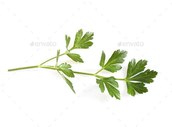 parsley in studio - Stock Photo - Images