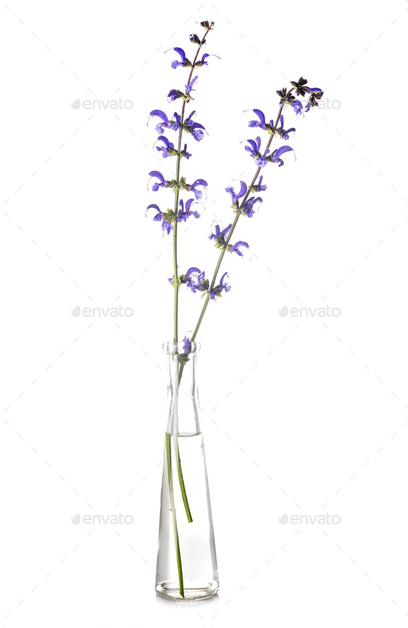salvia in test tube - Stock Photo - Images