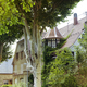 Beautiful gray traditional victorian house and shows a garden with trees. - PhotoDune Item for Sale
