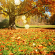 Autumn landscape background of trees and dry leaves on grass - PhotoDune Item for Sale