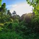 Summer forest landscape - PhotoDune Item for Sale