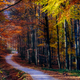 Landscape view of autumn forest colorful foliage and road - PhotoDune Item for Sale