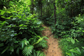 Asian tropical forest after rain - PhotoDune Item for Sale