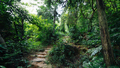 Trail in asian tropical forest after rain - PhotoDune Item for Sale