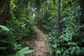 Trail in asian forest  - PhotoDune Item for Sale