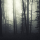 Halloween forest with fog through trees - PhotoDune Item for Sale