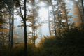 Enchanted autumn woods with mist - PhotoDune Item for Sale