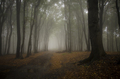 Autumn forest background - PhotoDune Item for Sale