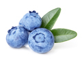 Blueberries with green leaves isolated on white background. - PhotoDune Item for Sale