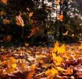 Falling leaves - PhotoDune Item for Sale