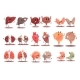 Human Internal Organs Healthy Vs Unhealthy Set Of - GraphicRiver Item for Sale