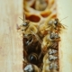 A  of a Bee Family at Work, Chaotic Motion Over Wooden Frames Inside the Hive - VideoHive Item for Sale