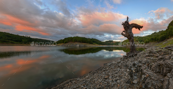 The trunk of an old dead tree on the bank of the river - Stock Photo - Images