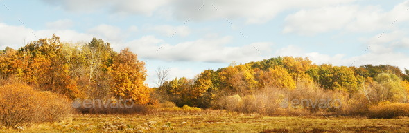 Wide panorama landscape with yellow trees - Stock Photo - Images