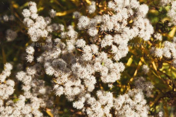 Natural fall background - autumn plants, selective focus - Stock Photo - Images
