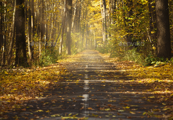 Landscape with empty countryside road and colored trees - Stock Photo - Images