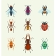 Vector Insects Icons Isolated on Background