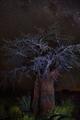 baobab - PhotoDune Item for Sale