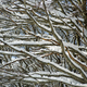 Snow-covered tree branch - PhotoDune Item for Sale