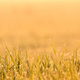 Nature background - dew on a grass lit by golden morning light - PhotoDune Item for Sale