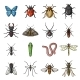 Different Kinds of Insect Cartoon Icons